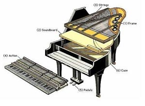 Những điểm khác biệt giữa đàn piano và đàn organ